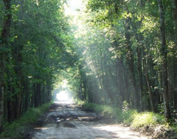 Dirt Road with sun rays