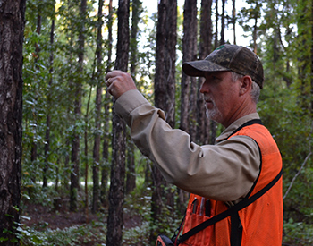 Forestry Evaluation